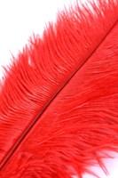 Красное страусиное пёрышко - 40 см. - фото 97213
