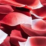 Лепестки роз с запахом - фото 243507
